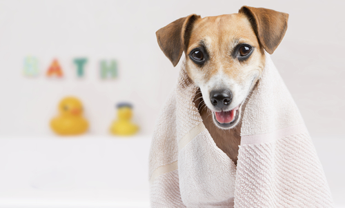 dog wrapped in bath towel