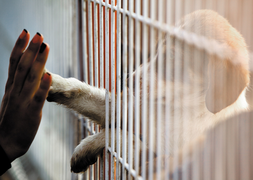 Human hand is touching a cute little doggie paw through a fence